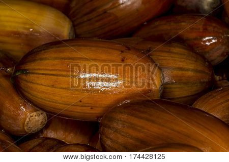 Acorn-  oak nut, is the nut of the oaks and their close relatives
