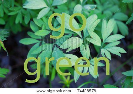 fresh green grass background. go green concept