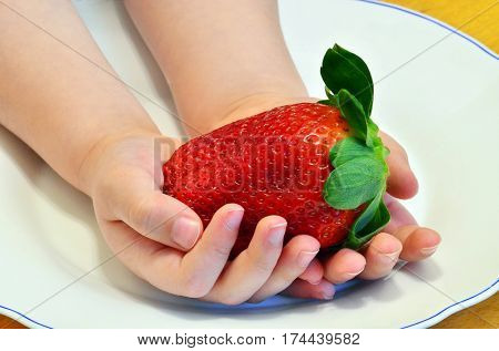 Giant natural strawberry in kid hands.