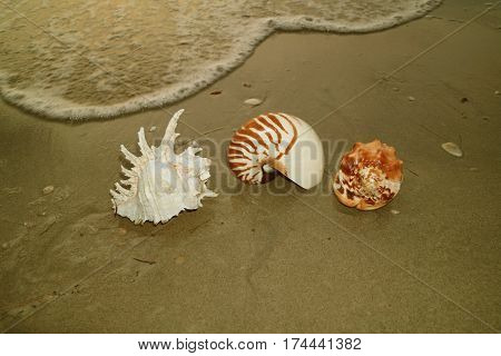 Unique Natural Seashells on the Sea Shore with the swash, Beach of Thailand