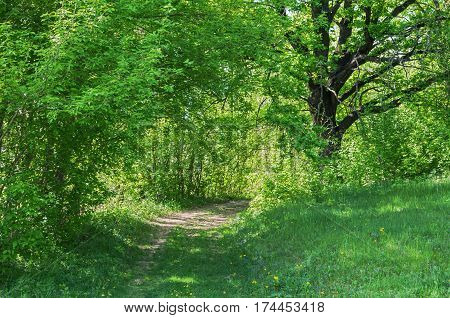 The shady view of road or track passing through deciduous green forest