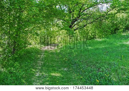 Overgrown view of road or track passing through deciduous green forest