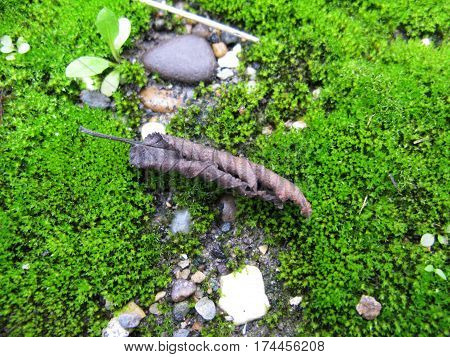 Microcosm moss stone ground leaf snail nature natural macro photo