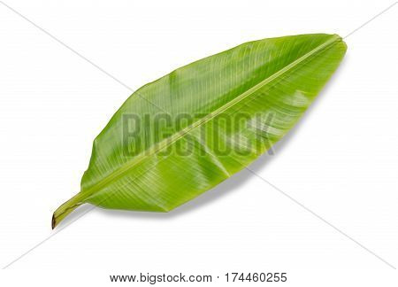 banana leaf isolated on white background File contains a clipping path.