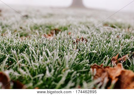 Close-up photograph of ice and frost on grass and leaves on a cold foggy winter morning in Broomfield Park, London.