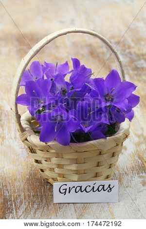 Gracias (which means thank you in Spanish) card with miniature wicker basket filled with purple campanula bell flowers on wooden surface