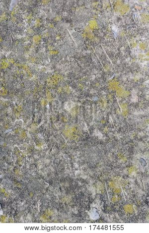 Stone covered by lichen. Natural textured background. Brown rock with cracks and colorful spots of lichen. Spotted yellow and grey abstract pattern with place for your text