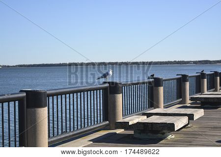 A seagull sits on a parapet on the shore of the ocean