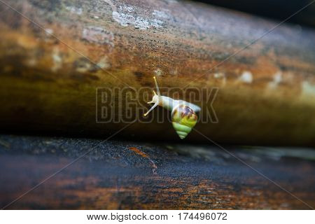 Green little cute snail on a nasty old bamboo after rain