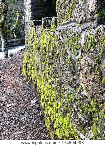 A moss covered rock wall that provides a lookout point for Sahalie Falls on the the Mackenzie River in Western Oregon on a wet winter day.