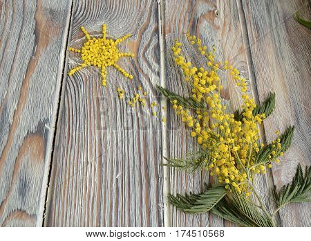 Mimosa and the sun made of mimosa flowers. Mimosa symbol of spring.