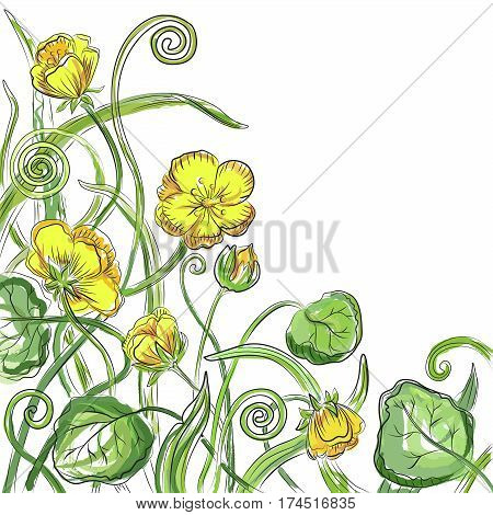 Marsh marigold cowslip, king-cup wild herbs vector floral blossom beautiful nature spring forest flower pattern background with blooming plants hand drawn in color watercolor isolated white background