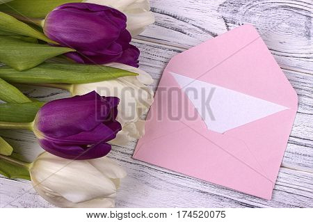 Purple And White Tulips With Pink Envelope On A White Wooden Background. Womans Day. 8 March.