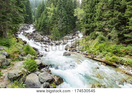 Mountain river in the green forest in the daytime