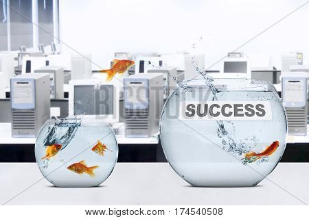 Picture of golden fish jumps to fishbowl with success text on the table concept of success in new place