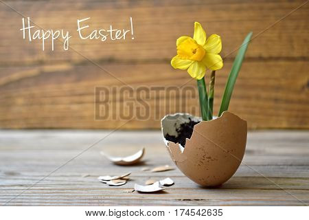 Happy Easter: Spring flowers in eggshell on wooden table