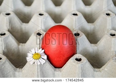 Red Easter egg and daisy in egg box