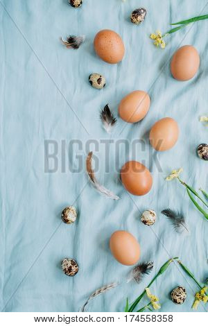 Beige Easter eggs quail eggs yellow flowers and feathers on blue textile background. Flat lay top view. Traditional spring concept. Easter concept.