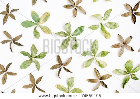Floral pattern made of green leaves on white background. Flat lay top view. Floral pattern. Pattern of flowers. Flowers pattern texture
