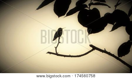 Humming bird perched on a rose branch