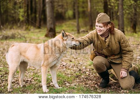 Pribor, Belarus - April 23, 2016: Young Woman Re-enactor Dressed As Russian Soviet Red Army Infantry Soldier Of World War II Playing with Dog In Forest