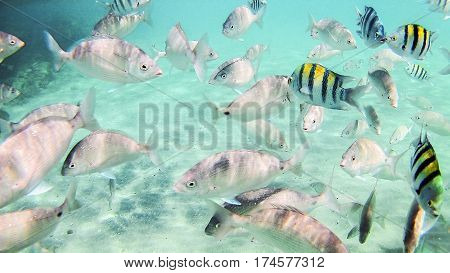 Photo Of A Tropical Fish On A Coral Reef In The Red Sea In Hurghada, Egypt