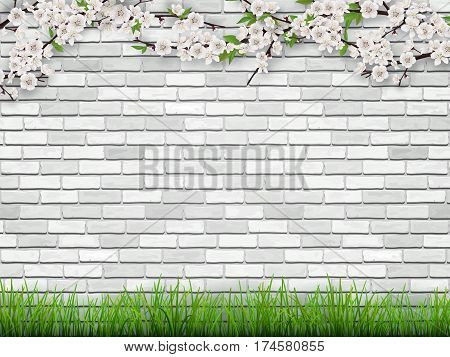 Blooming tree branch with flowers and green leaves on white brick wall background. The grass in the foreground. Spring vector background.