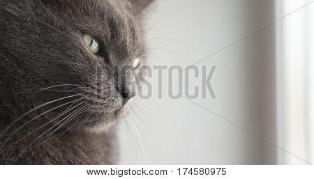 big gray cat sitting near window, 4k photo