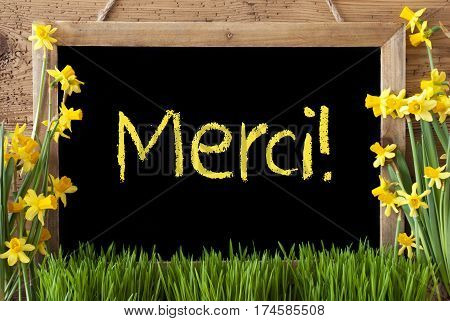 Blackboard With French Text Merci Means Thank You. Spring Flowers Nacissus Or Daffodil With Grass. Rustic Aged Wooden Background.