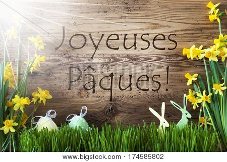 Wooden Background With French Text Joyeuses Paques Means Happy Easter. Easter Decoration Like Easter Eggs And Easter Bunny. Sunny Yellow Spring Flower Narcisssus With Gras. Card For Seasons Greetings