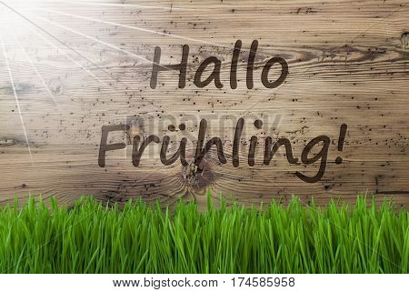 German Text Hallo Fruehling Means Hello Spring. Spring Season Greeting Card. Sunny Aged Wooden Background With Gras.