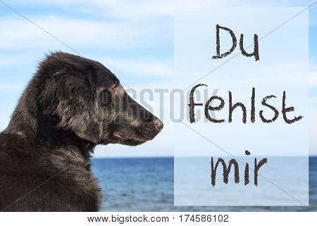 German Text Du Fehlst Mir Means I Miss You. Flat Coated Retriever Dog Infront Of Ocean. Water In The Background