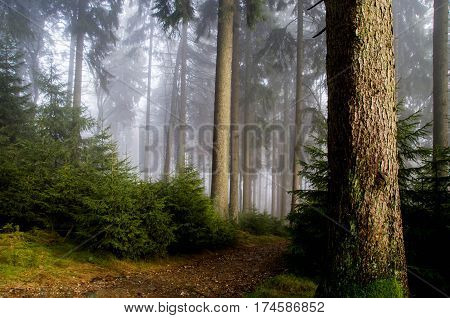 Misty forest with magic atmosphere, Mystical forest in green fog in the morning. Old Tree. Beautiful landscape with trees colorful leaves and fog. Nature. Enchanted trees in foggy forest.