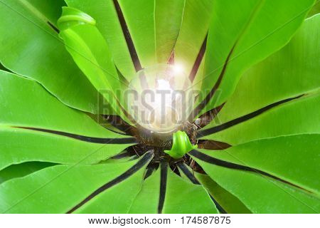 green leaves around the light bulb for nature energy and idea
