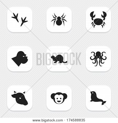 Set Of 9 Editable Zoo Icons. Includes Symbols Such As Sea Calf, Lobster, Arachind And More. Can Be Used For Web, Mobile, UI And Infographic Design.