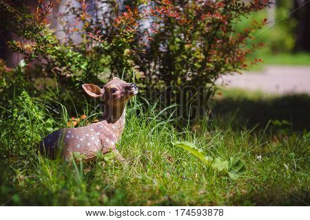 Garden decoration in the form of fawn, decorations