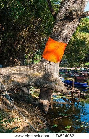 Big Tree Ordination with Yellow Robe in Buddhism Belief