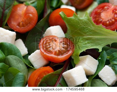 Salad with lettuce cherry tomatoes and cheese with diced