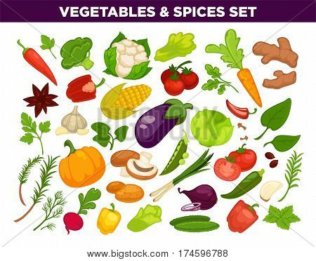 Vegetables and spices set of cauliflower, ginger, corn and beet, sage herb leaf, pumpkin and onion, tomato and broccoli. Vector oregano or basil thyme, cabbage or zucchini, mushroom and parsley
