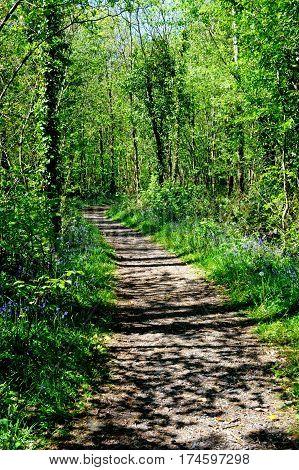 Beautiful Killinthomas forest on a spring time Ireland