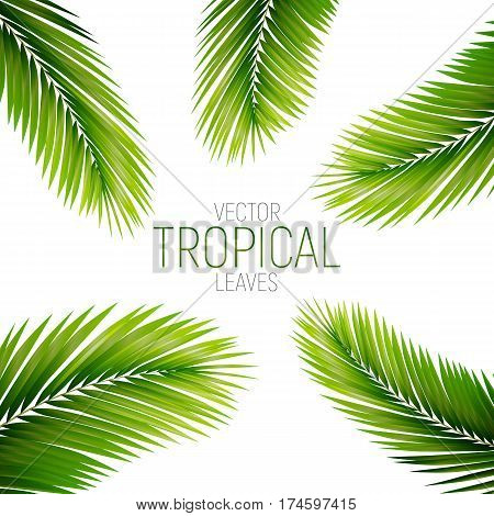Tropical palm leaves. Vector exotic palm leaves.
