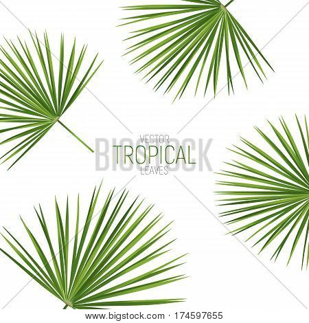 Tropical palm leaves. Vector exotic fan palm leaves.