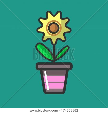 Yellow spring flower with green leaves isolated on a greenish background. Vector illustration in flat style of domestic attribute for windows decoration. Home plant with many petals in flowerpot