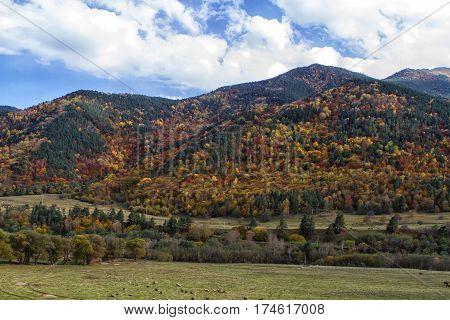 Autumn landscape in the mountains of Lago-Naki North Caucasus Russia
