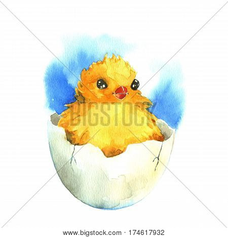 Chicken in the eggshell. Watercolor illustration on a white background