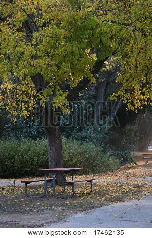 Picnic Bench in the Woods