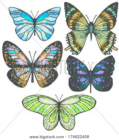 vector set of colorful isolated hand-drawn butterflies