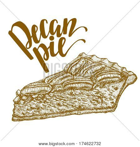 vector hand drawn graphic illustration of pecan pie