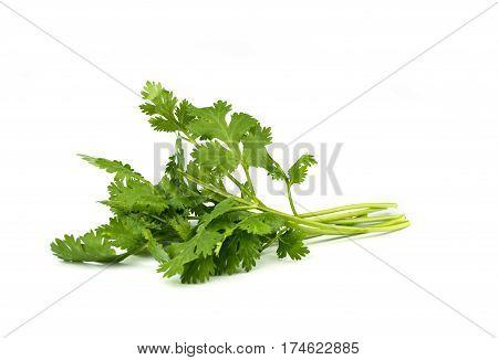 Coriander Leaves  Vegetable.