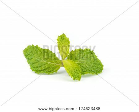 Fresh Peppermint  Leave.